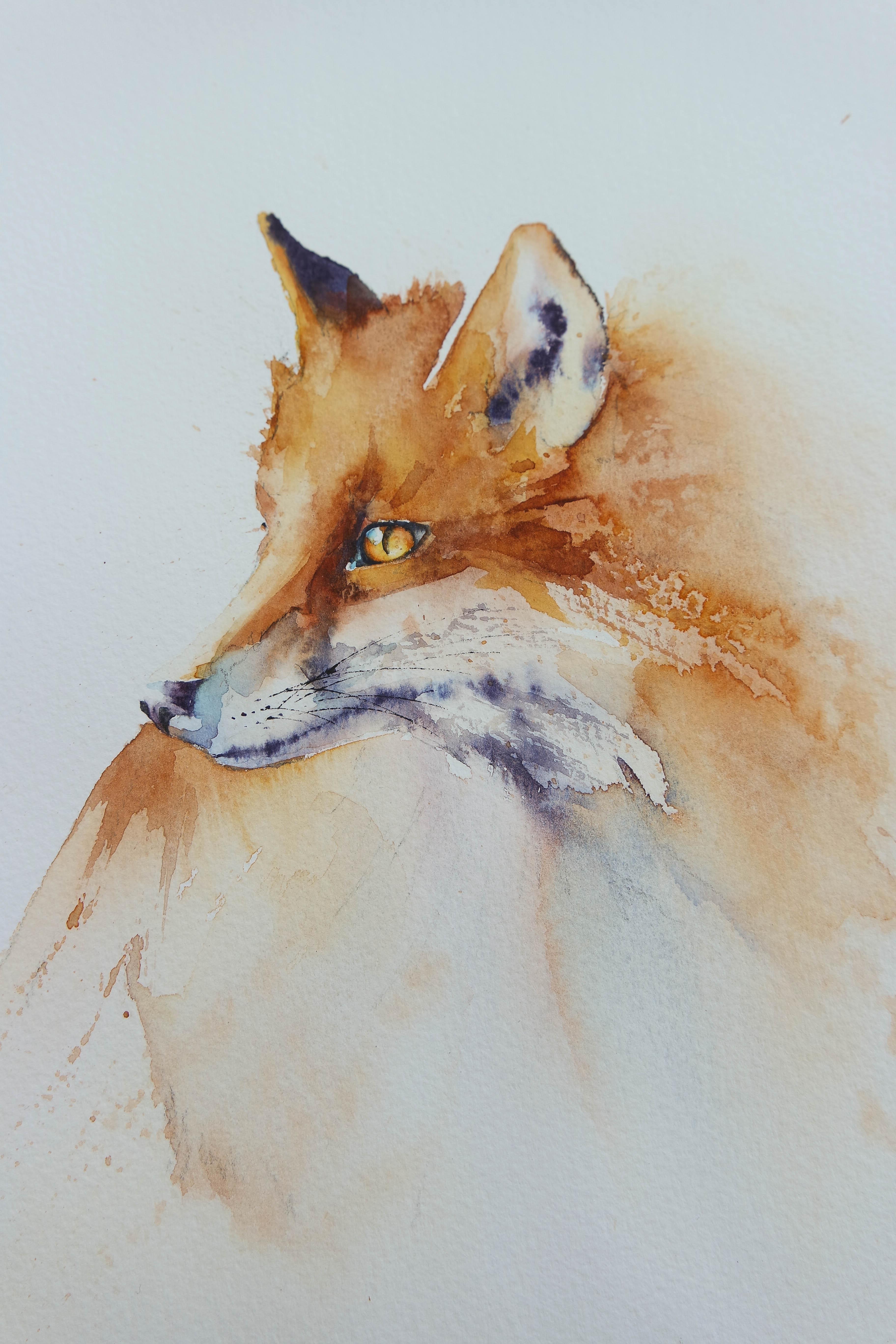 Fox – Rachel Toll